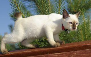 Самый злой кот в мире, злобные и страшны кошки