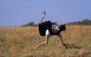 Какое самое высокое животное на Земле и в мире?