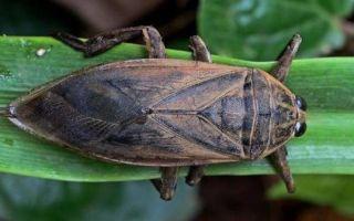 Какого размера самый большой жук в мире?