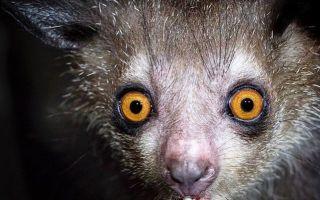 Какое самое редкое животное в мире и на Земле?