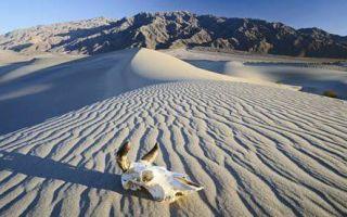 Где самая высокая температура на земле (воды и воздуха)?