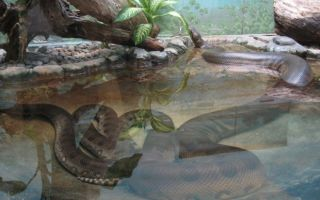 Самая большая анаконда в мире: фото, где обитает