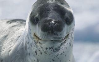 Какие самые милые животные в мире?