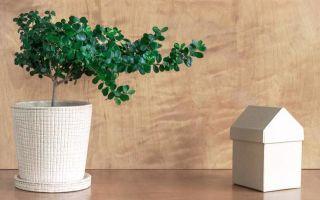 Самые неприхотливые комнатные растения (как цветущие, так и нет)