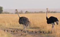 Какая самая большая птица на планете (в том числе хищная)