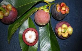 Какой фрукт самый сладкий в мире?
