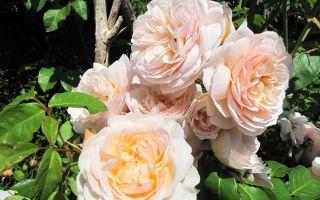 Самые красивые цветы мира — роза, орхидея и другие
