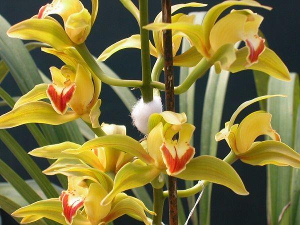 Самые красивые цветы мира - роза, орхидея и другие
