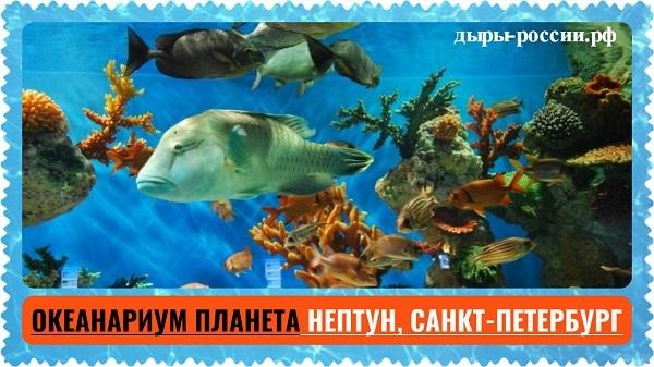 Самые большие океанариумы россии и москвы