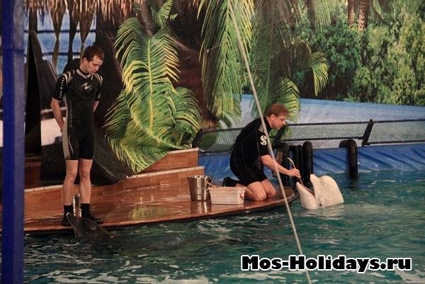 Самый большой дельфинарий в москве, где он находится