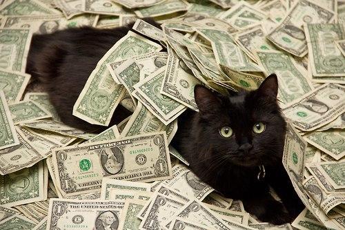 Какая самая дорогая порода кошек в мире