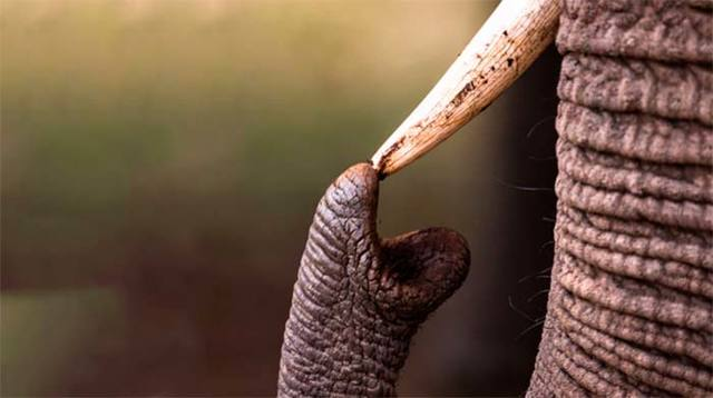 Какое самое умное животное на земле: топ самых умных в мире