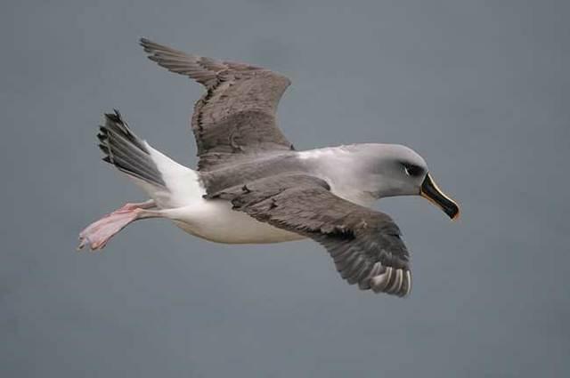 Самая быстрая птица на земле: список наиболее быстрых пернатых мира