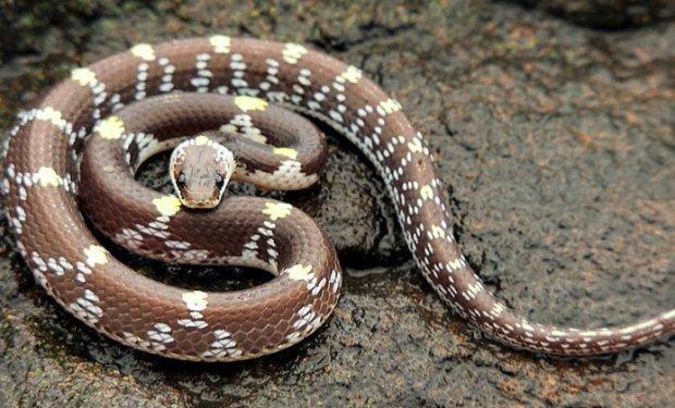 Самые маленькие змеи в мире: список лидеров