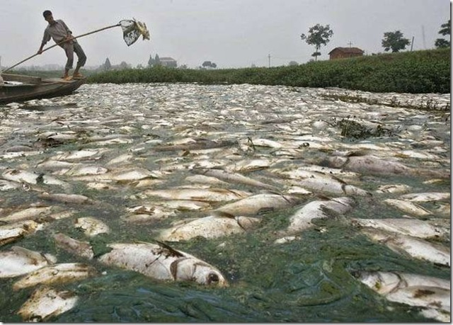 Какая река самая страшная в мире, где она протекает