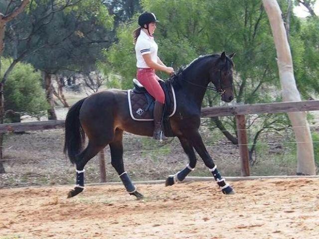Самая дорогая в мире лошадь: к какой породе она принадлежала?