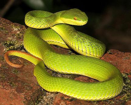 Какая самая опасная змея в мире: топ самых страшных