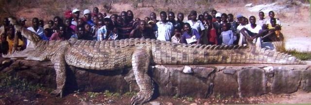 Самые большие и длинные крокодилы современности и прошлого