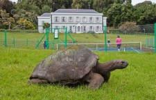 Самая старая черепаха в мире: сколько ей лет, где она живет