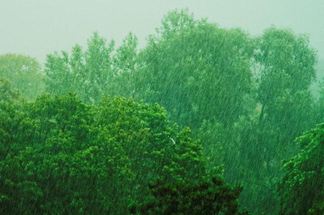 Самое влажное место на земле: где оно находится