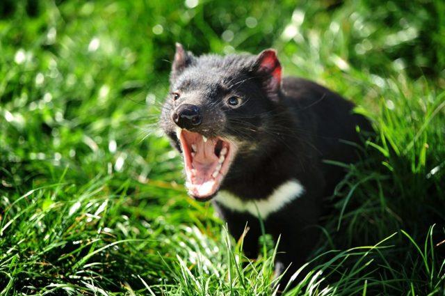 Самое страшное животное в мире: кого действительно стоит бояться?