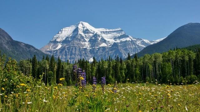 Самая высокая гора северной америки (сша), ее высота в метрах