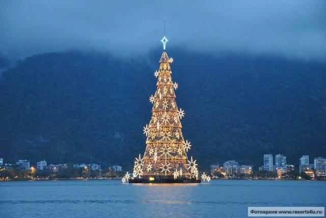 Самая большая елка в мире и в россии (топ-6 высоких елок)