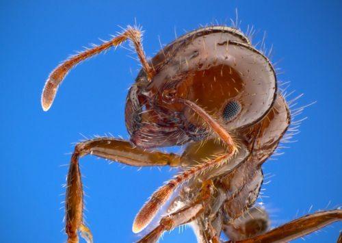 Самые опасные насекомые в мире, ядовитые и переносчики болезней