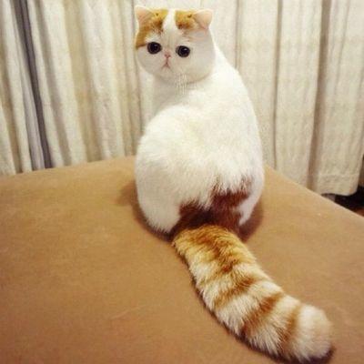 Самые милые котята: какой кот самый милый в мире