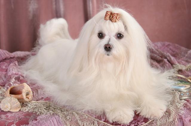 Какие самые добрые породы собак в мире