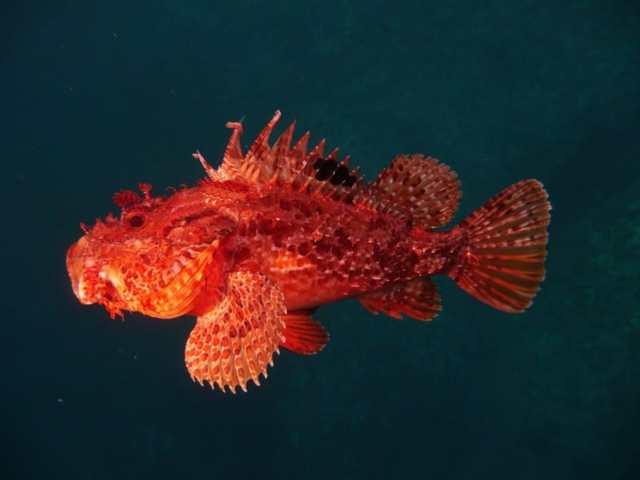 Какая самая опасная рыба в мире и где она обитает?