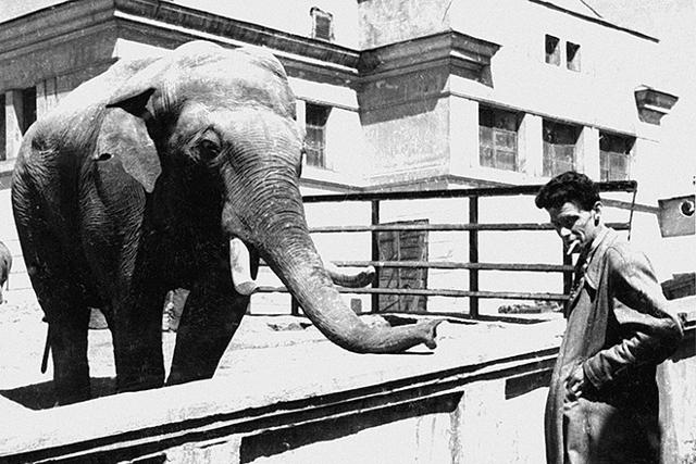 Какой самый большой слон в мире