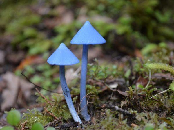 Какой самый редкий гриб в мире