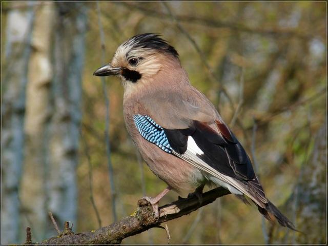 Какая птица самая умная в мире?
