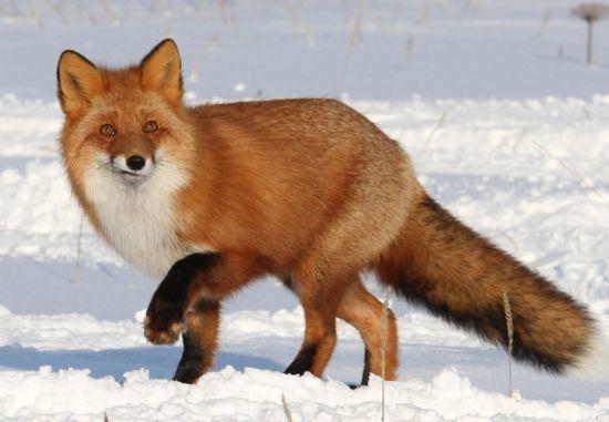 Самые красивые животные мира (дикие и домашние)