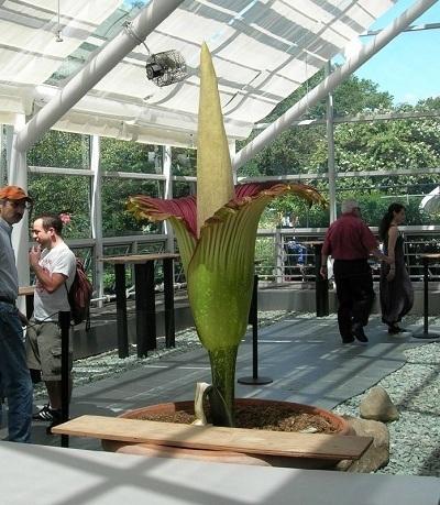 Какой цветок самый большой в мире