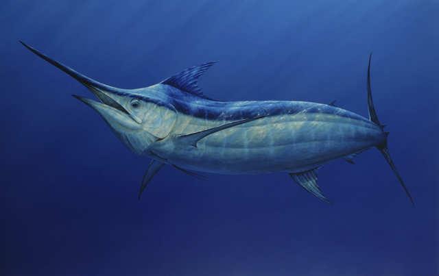 Самые большие рыбы в мире, какая наиболее крупная рыба на земле