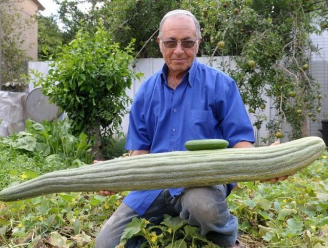 Самый большой в мире арбуз – его размеры и вес