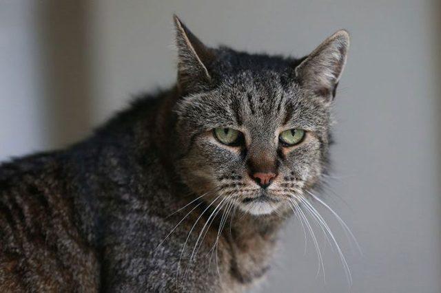 Самая старая кошка в мире, как зовут старых котов