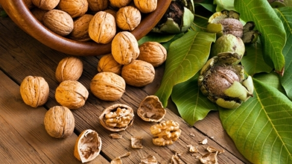 Какой самый полезный орех для мужчин и женщин