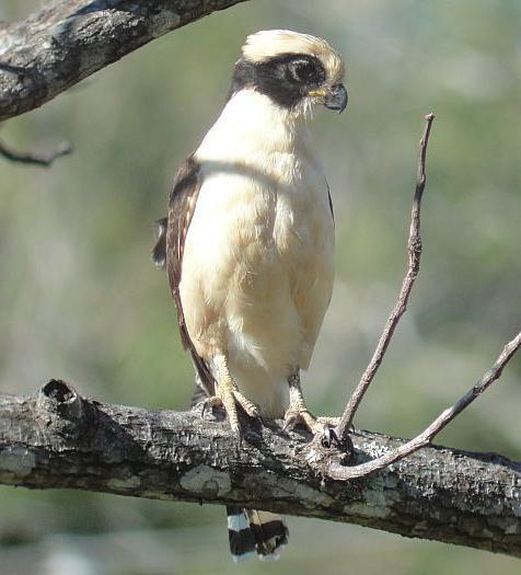 Какая самая маленькая птица в мире: список крошечных пернатых земли