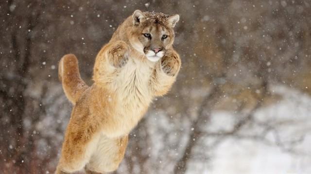 Какое животное самое грациозное в мире?