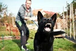 Самые агрессивные породы собак в мире, основные причины агрессивного поведения