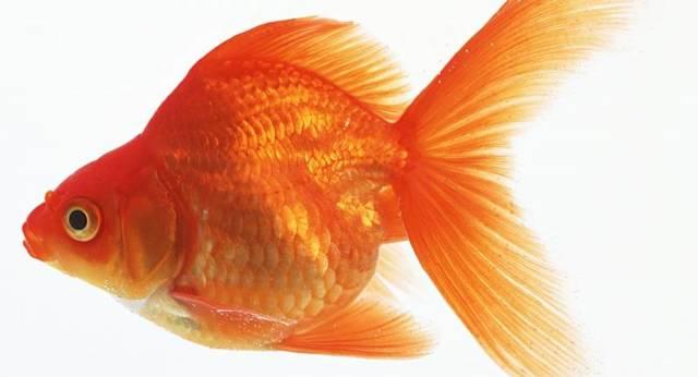 Самая дорогая рыба в мире, какие виды наиболее дорогостоящие