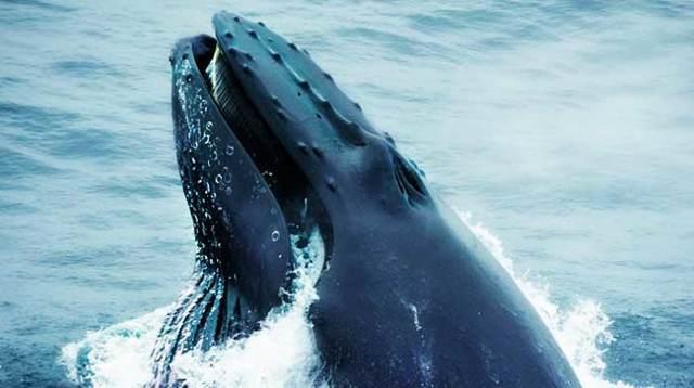 Самые большие киты в мире – синий, кашалот, финвал и другие