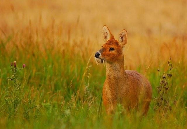 Как выглядят самые странные животные мира