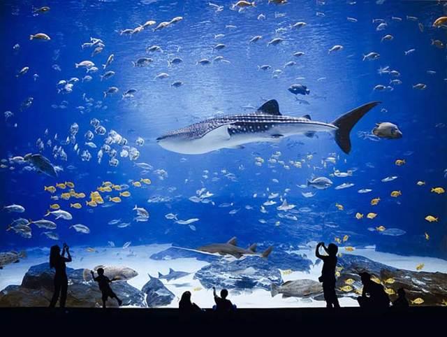 Какой самый большой аквариум в мире: рейтинг гигантов