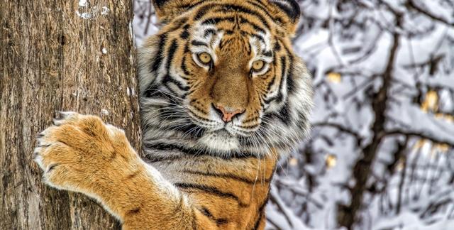 Какое самое редкое животное в мире и на земле