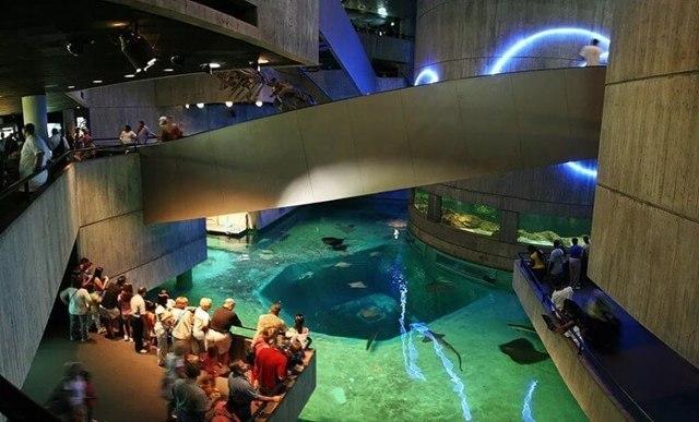 Самый большой океанариум в мире: где он находиться?