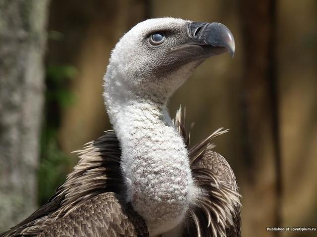 Какая самая долгоживущая птица в мире?